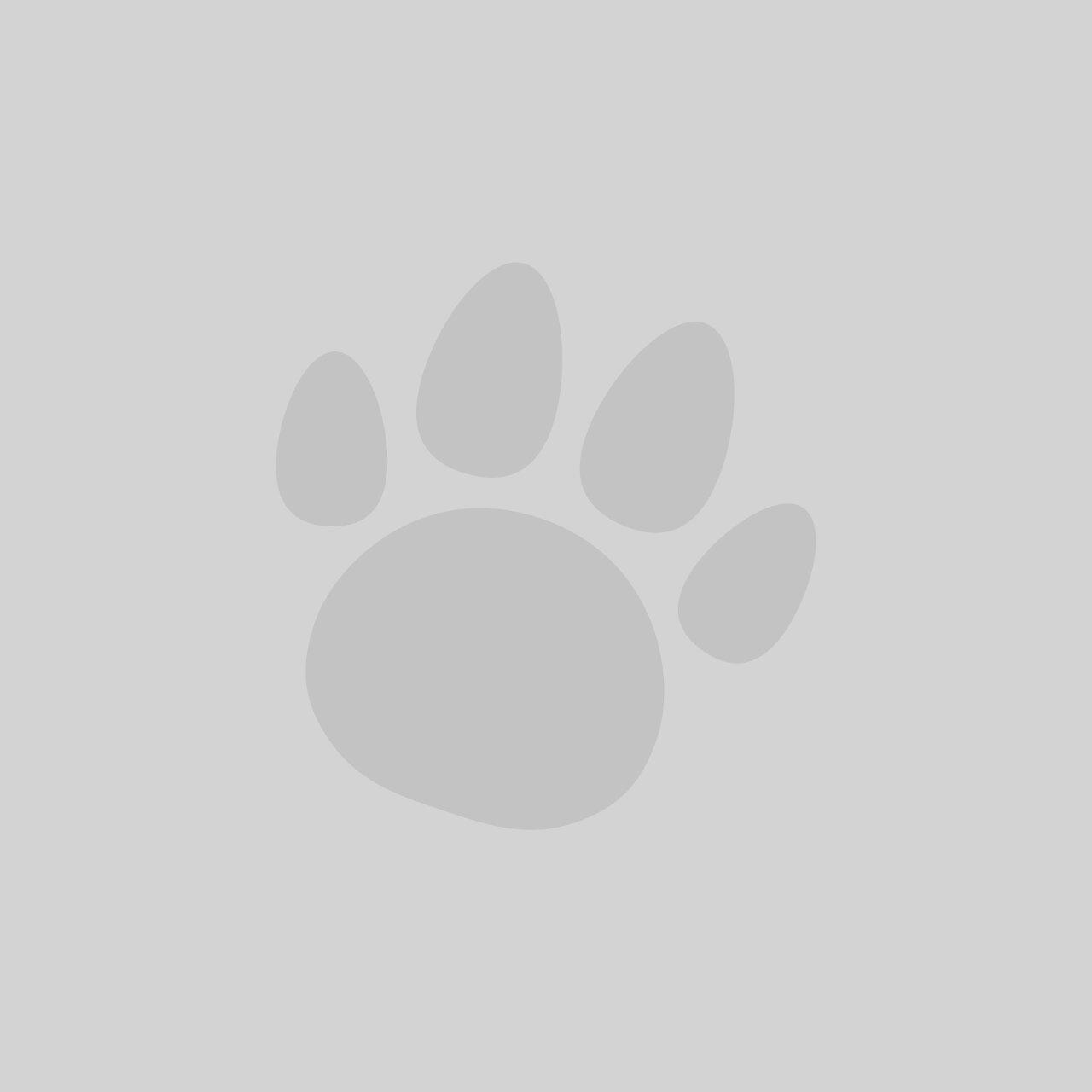 Doodlebone Bold Padded Dog Collar Red (size options)