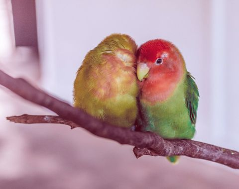 Bird & Wildlife advice