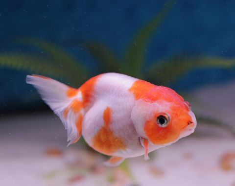 fish advice