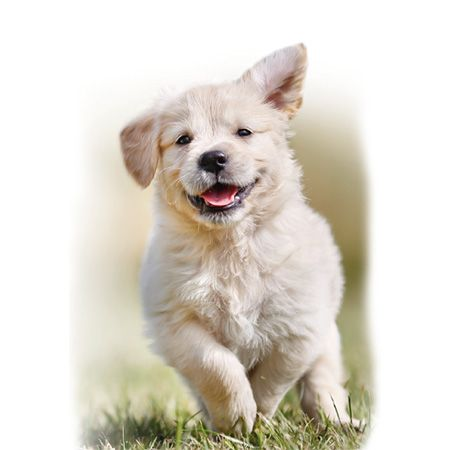 Jollyes Vet Puppy start pack